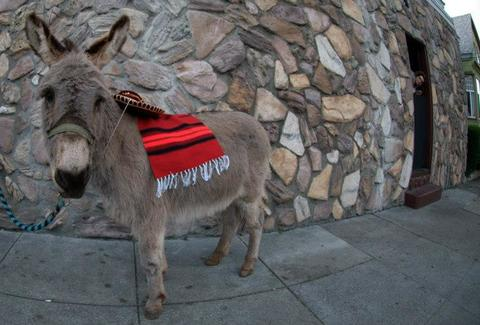 A donkey in front of a take-out window