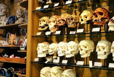 Skulls at The Evolution Store