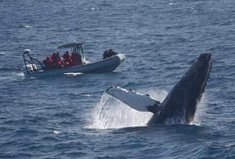 Whale breaching near Adventure RIB rides San Diego tour