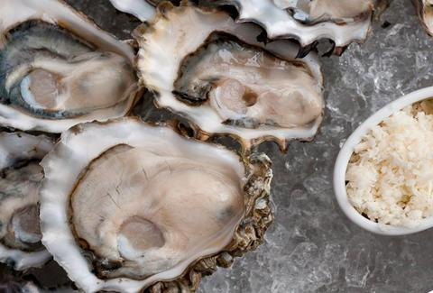 Closeup of oysters in ice