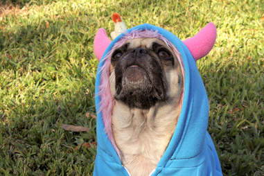 Dog in Demon Costume