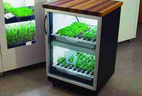 hydroponic indoor herb and vegetable garden