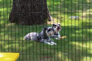 Dog park at Mutts Canine Cantina, Dallas TX