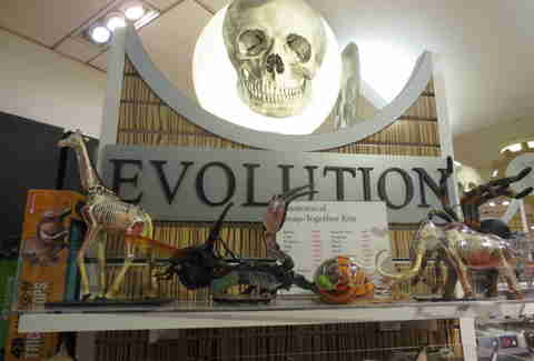 Evolution section at FAO Schwarz