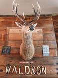Deer at Waldron Lodge, Dallas TX