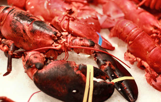 The Weekend Playbook: Lobster bakes, new biergartens, and meatball cook-offs