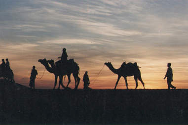 Adventure Travel Agency's India camel safari