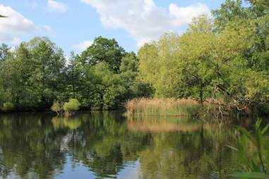 hampstead heath ponds london
