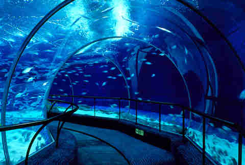 Shanghai Ocean Aquarium, Shanghai, China