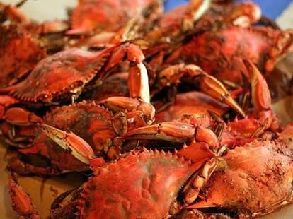 quarterdeck arlington crab
