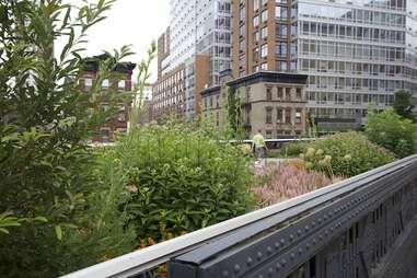 The High Line -- NYC