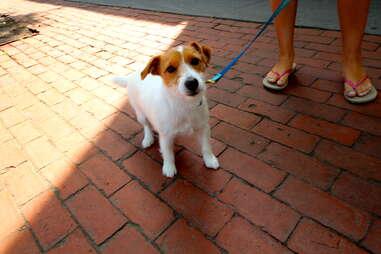 Bella, dog of the Hamptons