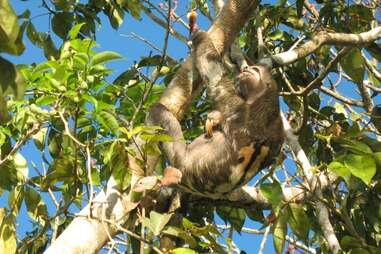 M/V Aqua Amazon Sloth