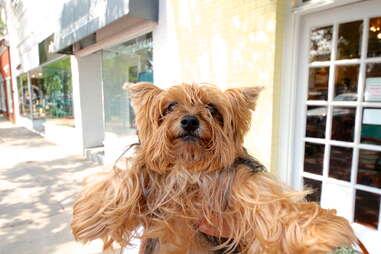 Buddy, dog of the Hamptons