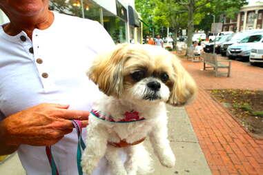 Charlie, dog of the Hamptons