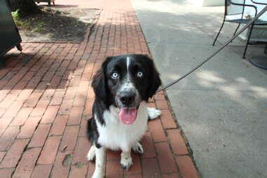 Jackson, dog of the Hamptons