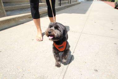 Luna, dog of the Hamptons
