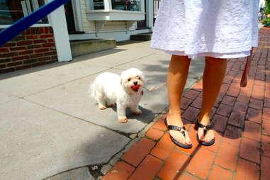 Nina, dog of the Hamptons