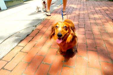 Rudy, dog of the Hamptons
