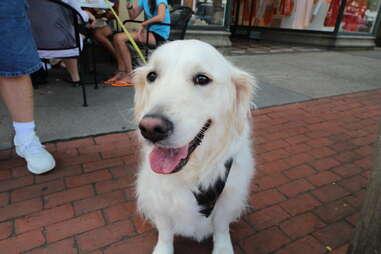 Sierra, dog of the Hamptons