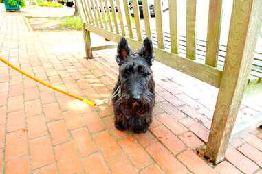 Tucker, dogs of the Hamptons
