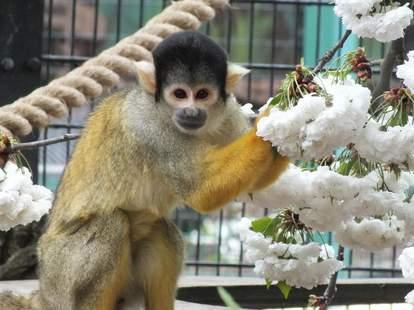 monkey at battersea park children's zoo london