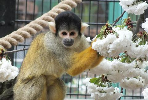 monkey at battersea park children's zoo london