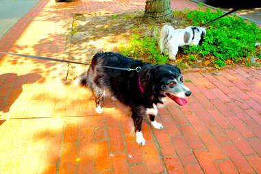 Sami, dog of the Hamptons