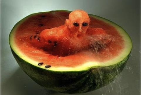 Watermelon swimmer.