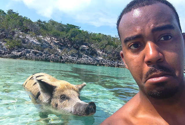 Eating conch dork and swimming with feral pigs in Exuma