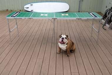 Pancho, dog of the Hamptons