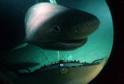 Deep Submarine Shark Adventures Shark Diving 3000ft Into
