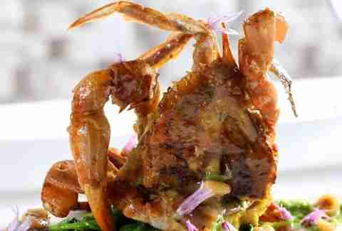 equinox dc soft shell crab