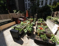 Outdoor shot of Exchange Alley's herb garden