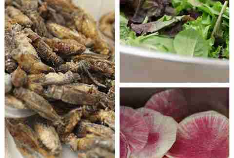 candied cricket salad