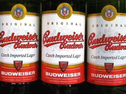 Budvar beer