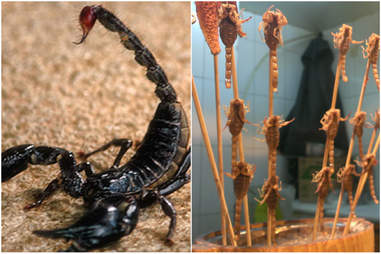 Fried scorpion
