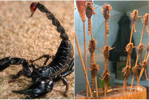 Fried scorpion