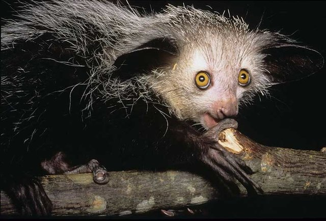 The world\'s ugliest animals... and their dating profiles