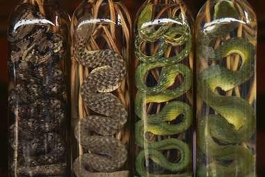 Snake Wine in Vietnam.