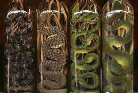 Snake Wine in Vietnam.
