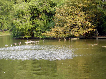 Water with geese and trees
